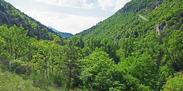 2---Boschi-della-Valle-dell'Aterno